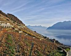 Randonnée dans les vignobles du Lavaux